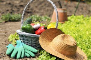 7 Tips to Help Your Grow a Better Summer Garden