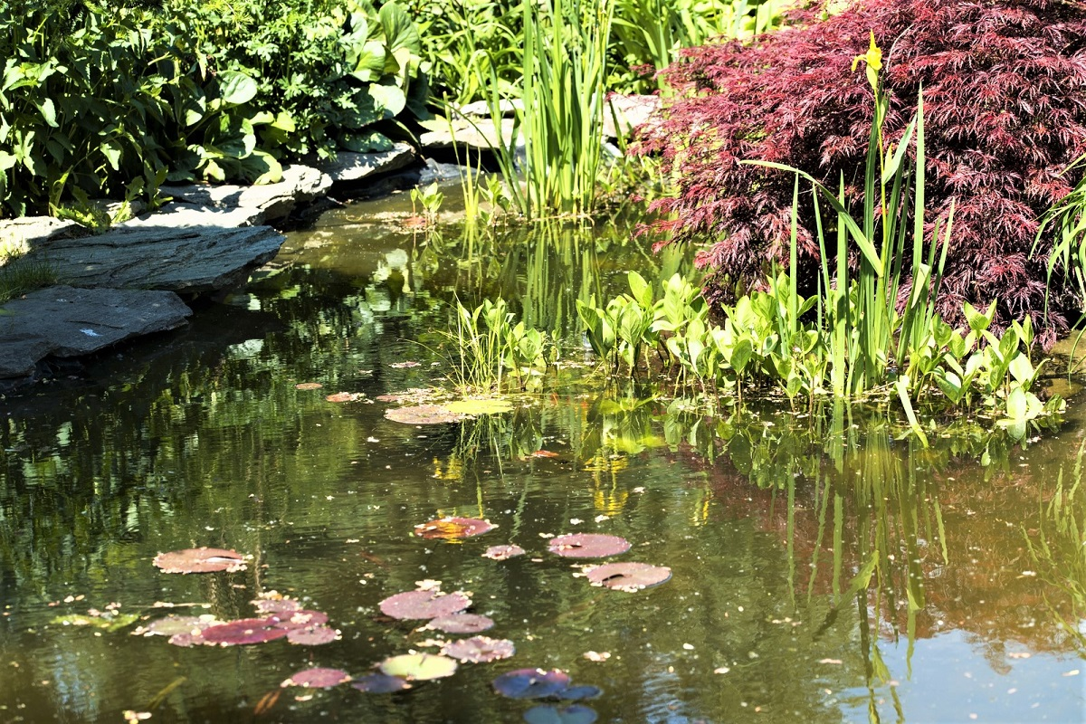 How to Create Your Own Wildlife Pond