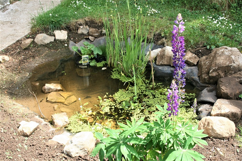 Once the pond is full, you will need to wait at least a week for it to settle.