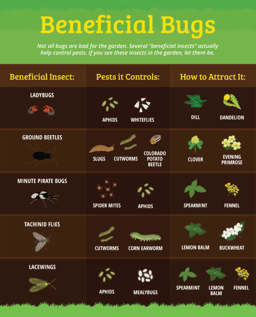 Work with nature by encouraging these beneficial bugs.