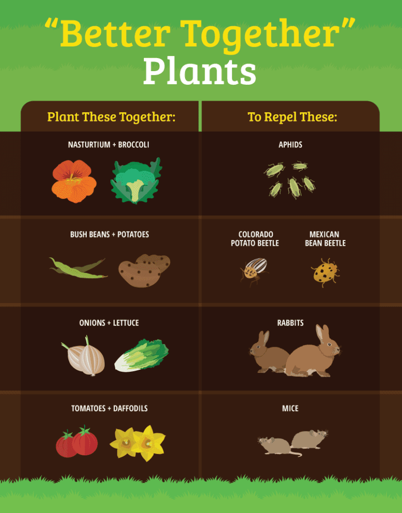 Many plants are complementary in their ability to control pests.