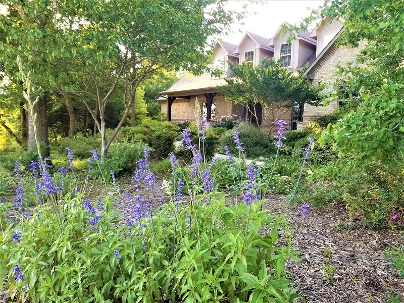 Native plants are gradually earning space in backyard gardens everywhere.
