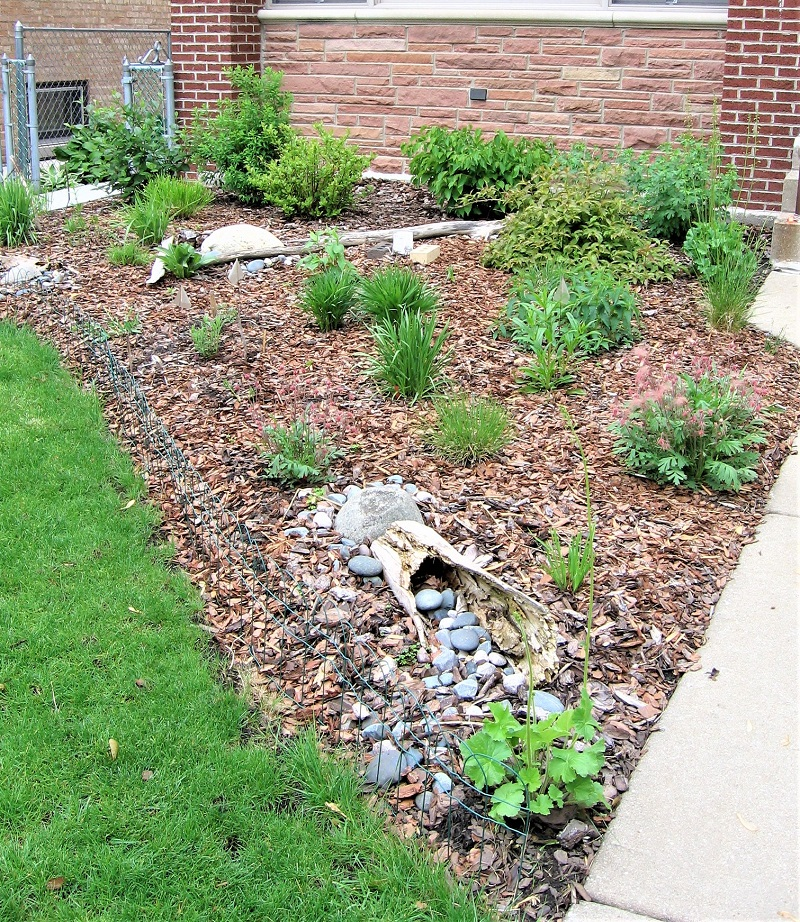 Shrinking your lawn can create prime real estate for native plants.