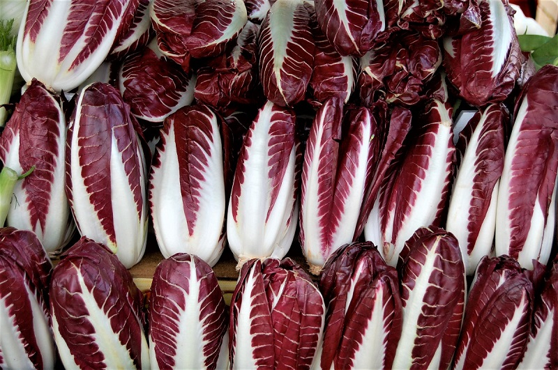 The radicchio is a cousin of the wild chicory.