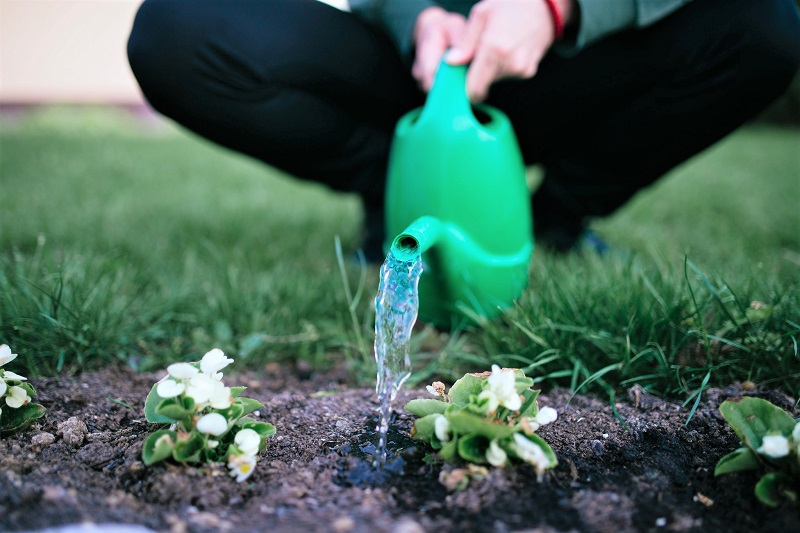 Protect your plants against heat stress by keeping the soil evenly moist.