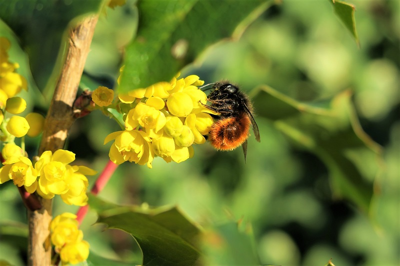 Small, harmless bees can be quite entertaining as they flit about and feed on nectar and pollen.
