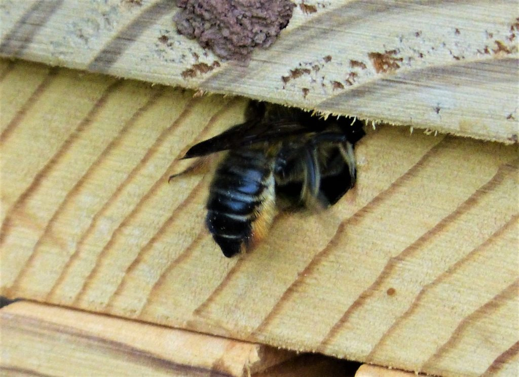 Wild, hole-nesting bees need the sun's warmth for energy.