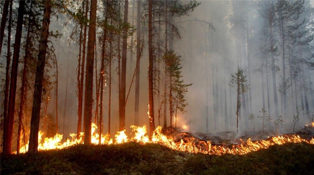 Summer 2018 saw Sweden burning!