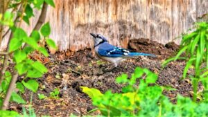 7 Harmless Ways to Keep Birds Away from Your Vegetable Garden