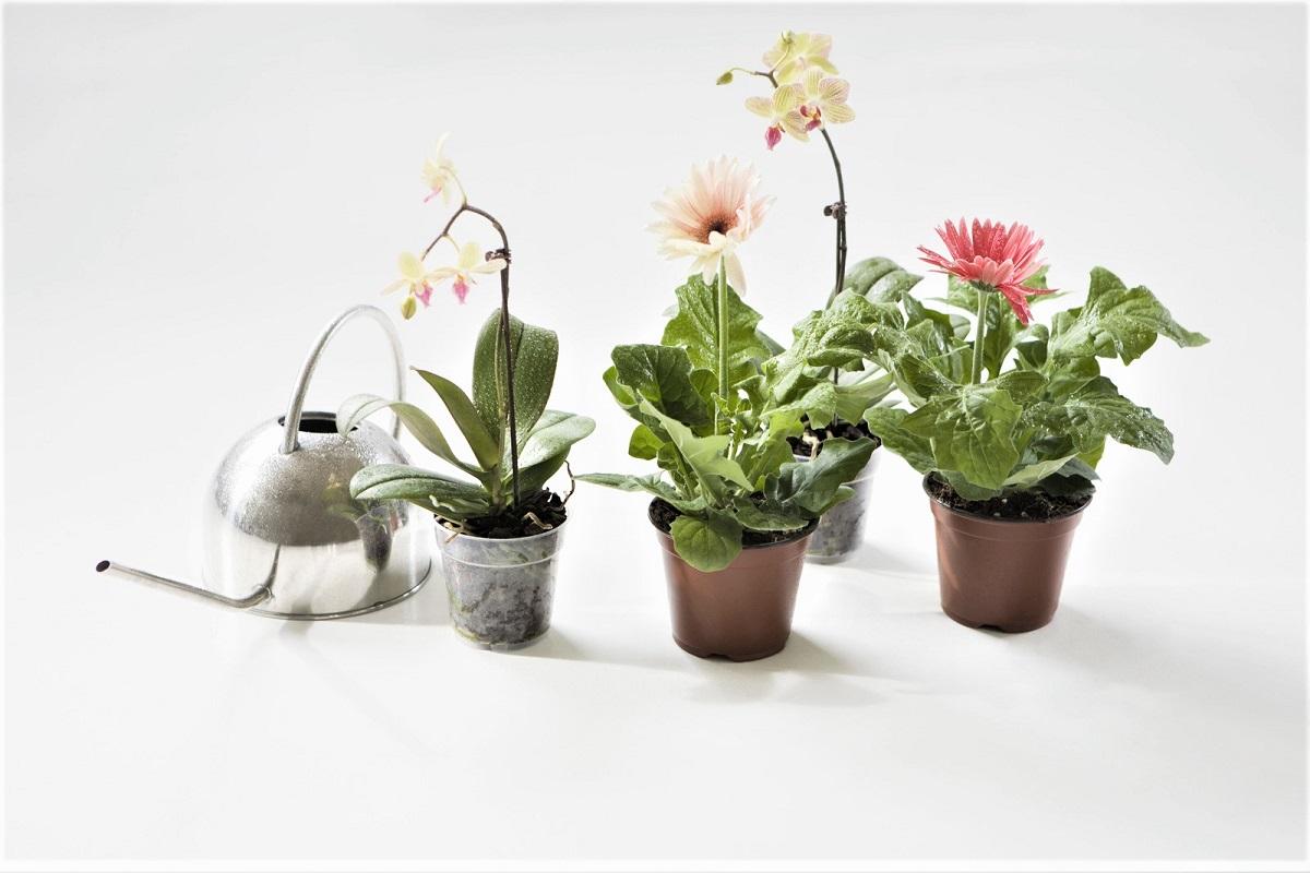 Pest Control for Your Indoor Garden
