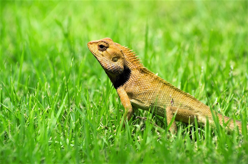 Like many other wild animals, reptile and amphibian populations are declining.