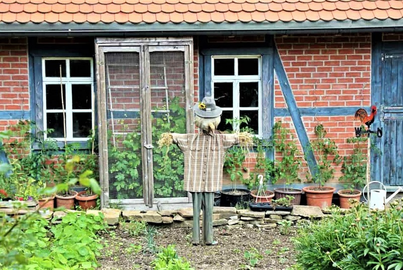 You need to move your scarecrow's post a few times around each week.