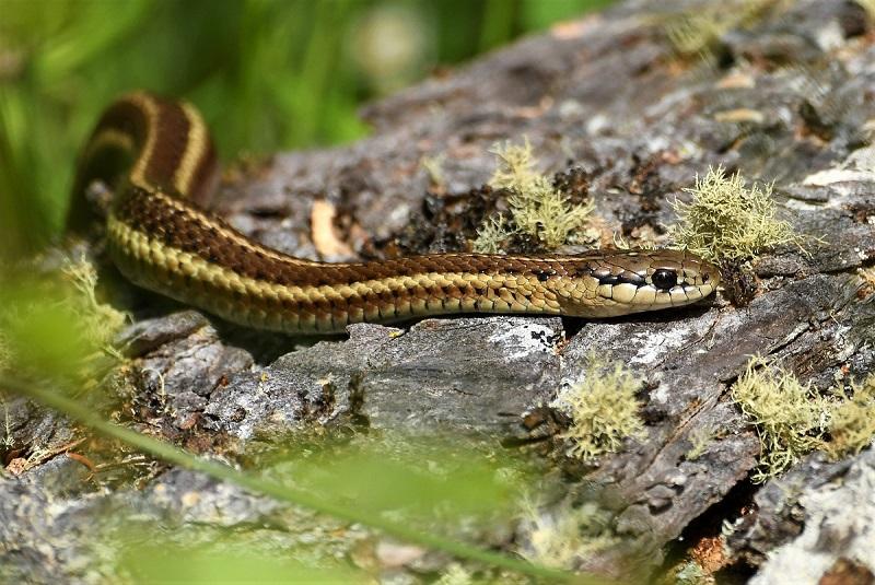 Frogs, snakes, and lizards eat your garden's worst enemies.