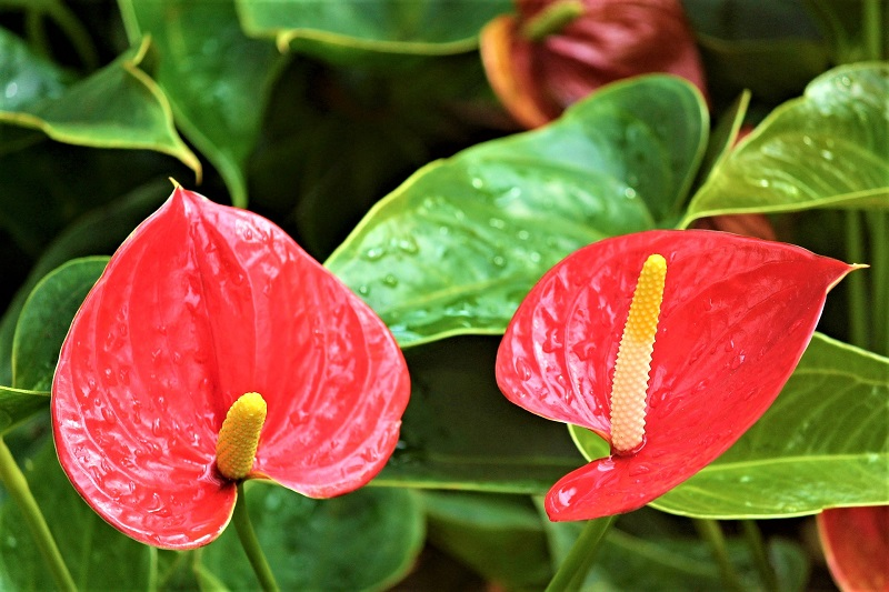 Enthusiasts appreciate the plants for their exotic looks.
