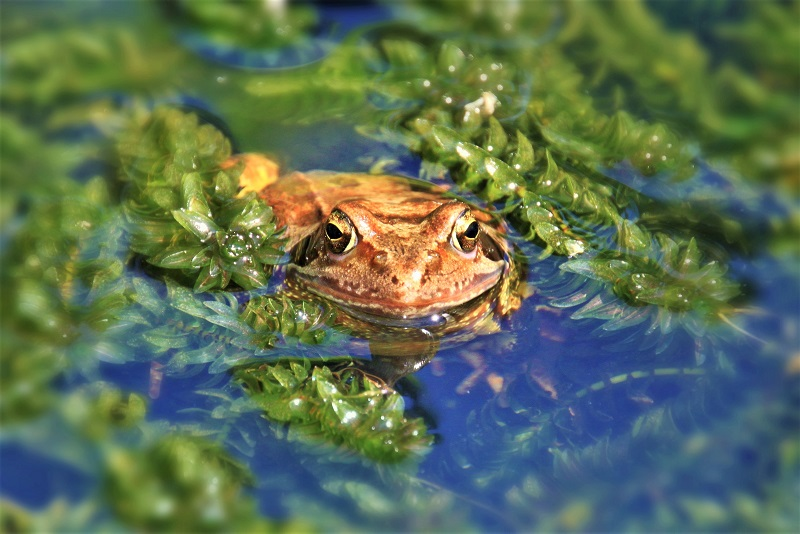 Consider installing a wildlife pond in your backyard.