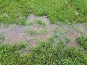 Five ways to fix your lawn drainage issues...