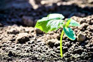 Is it Time to Start Your Vegetable Patch?