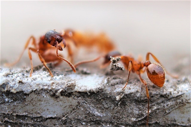If you're thinking about treating ants in your lawn, it's important to consider the consequences on the area's ecosystem.