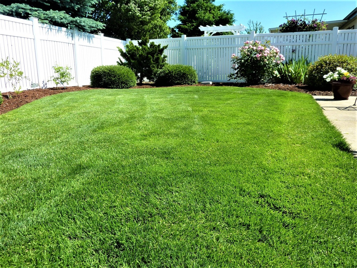 The Right Way to Mow an Overgrown Lawn
