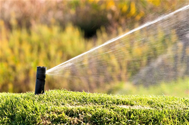 Maintaining a thousand square feet of grass requires 620 gallons of water each week.