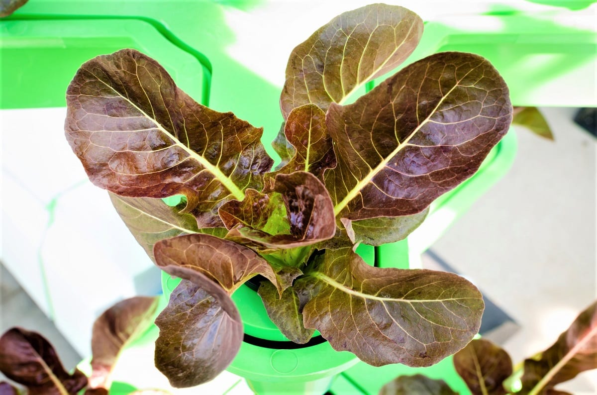 Have you considered growing a hydroponic garden?