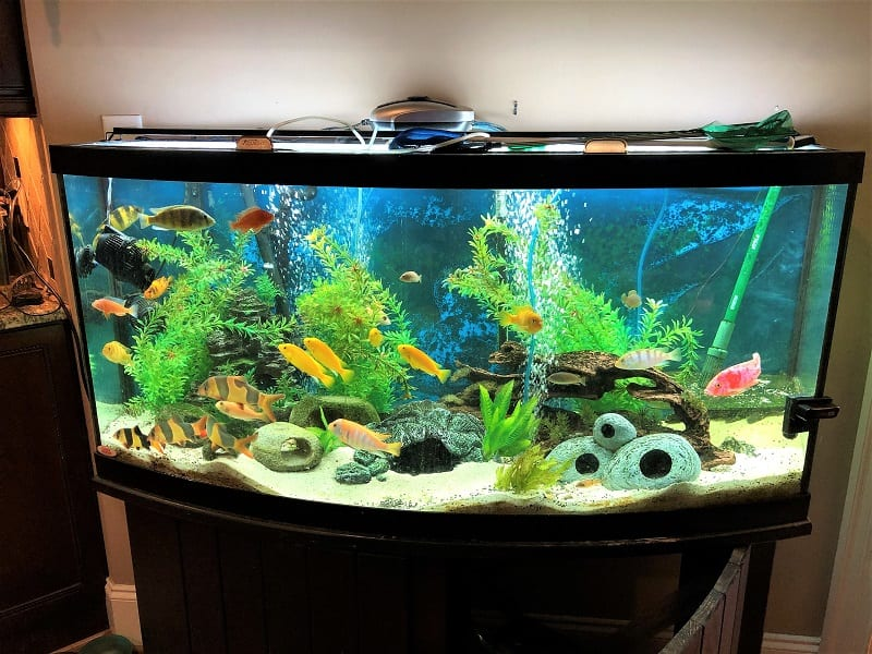 You might be able to repurpose a standard 20-gallon fish tank for an aquaponics system with small fish.