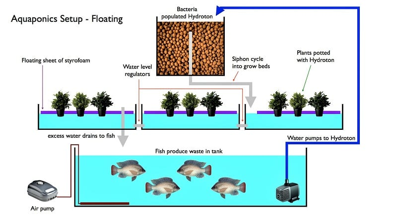 Combining hydroponics with aquaculture, the modern aquaponics system operates on a principle similar to that of the Aztec chinampa.