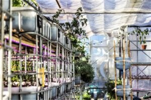 How to Start an Aquaponic Garden