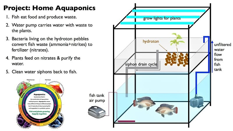 The basic premise is that the waste produced by fish feeds plants. Plants clean the water for the fish, creating a small, self-contained ecosystem.