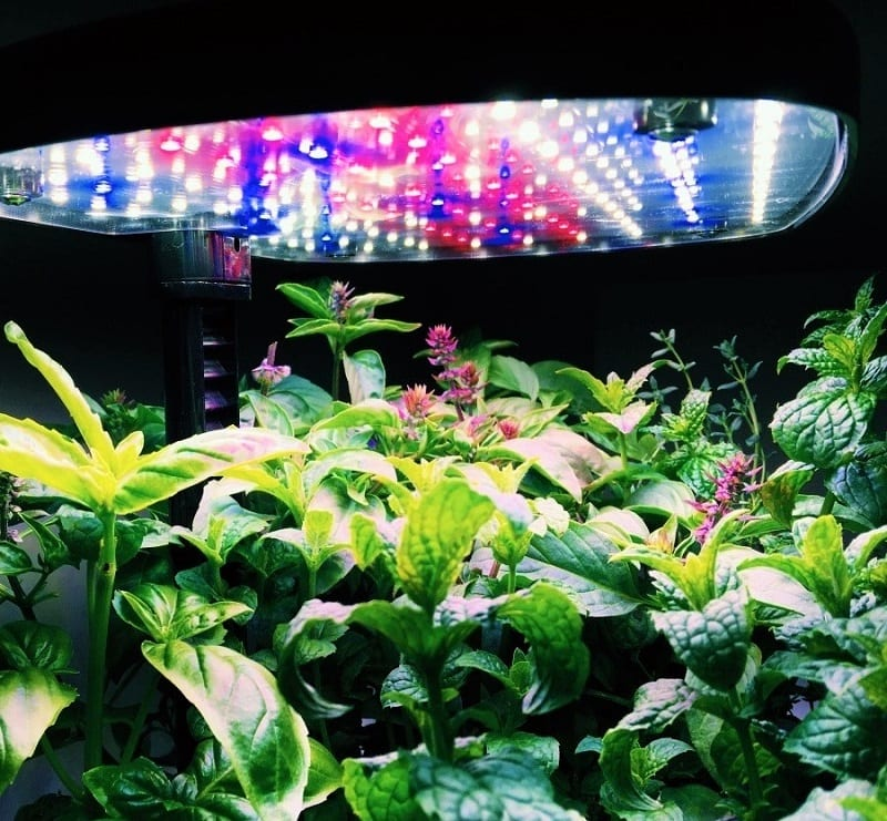 Inspired by NASA technology, today's soil-less indoor garden kits and systems provide the perfect environment for plants to thrive.