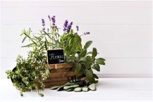 The Best Soil-less Indoor Garden Kits