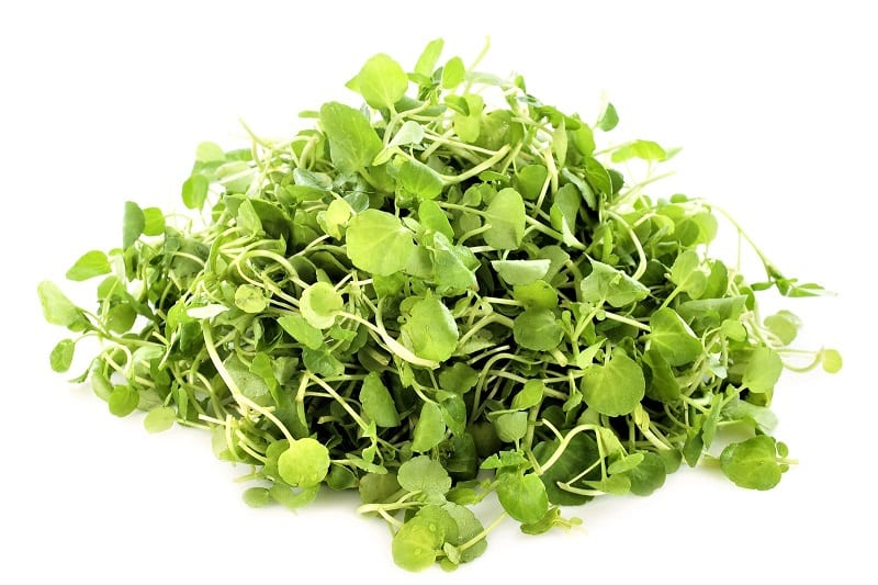 Experts recommend leafy plants like watercress for aquaponics setups. These plants tend to grow well in soil-less systems.