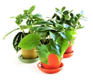 A Beginner's Guide to Creating a Houseplant Starter Kit